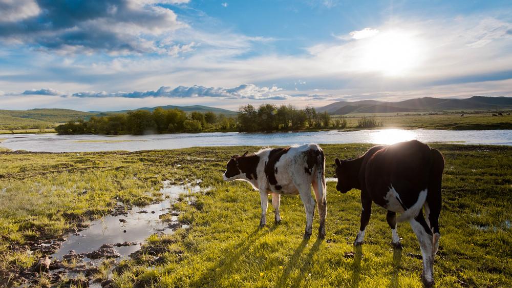 中国最美的草原——呼伦贝尔大草原
